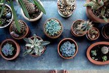 HOME // Gardening / by Liz Morrow Studios