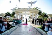 St. Regis Weddings / The St. Regis Monarch Beach Resort in Dana Point, CA