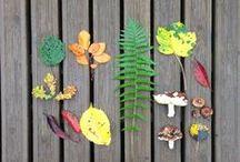 fall-autumn-automne