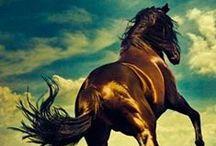 Horses & Freedom / by Loreta Bidot