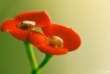Delicate like a flower / by Loreta Bidot