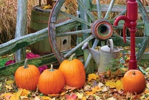 Autumn / by Alpaca Farmgirl