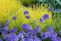 Gardening Ideas/ Companion planting / by Terri Miller