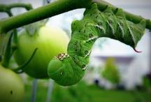 Garden: Pest control  / by Linda Humphrey