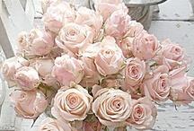 Blush ❤
