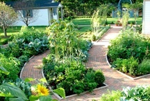 Garden: Raised Beds / Trellises / by Linda Humphrey