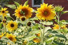 GARDEN: The Garden I Wish / Botanic