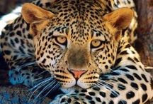Seeing spots before my eyes! / by Susan Gajderowicz