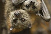 Bats, Bugs & Butterflies / by Linda Humphrey