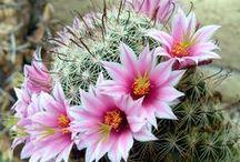 Garden: Succulents / by Linda Humphrey