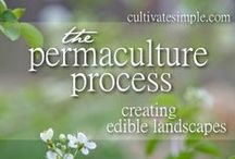 Permaculture / by Linda Humphrey