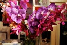 Radiant Orchids Of 2014 / Pantone's Color Of The Year for 2014, Radiant Orchid, is more rare than emerald, more mystic than tangerine... and in a feng shui sense, it may help your dreams come true!   / by Dana Claudat