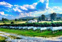 Virginia Wineries / Wineries in Virginia