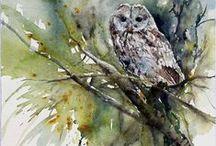Eulen / Owl