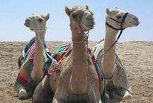 Qatar Travel Inspiration
