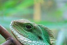 Reptiles / amphibians