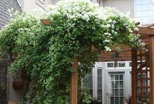 Green Thumb / Gardening  / by CROWN & CLOTH