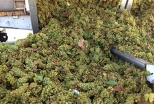 Harvest at Cambria