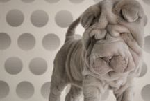 Shar Pei / Dog breed favorite! / by CROWN & CLOTH