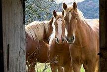 Horses, Horses, Horses / Horses, horses, horses. / by Terry Tinker