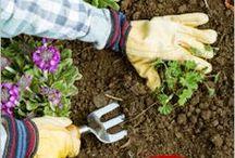 DIY: Gardening / All things DIY Gardening.