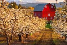 Orchards and Vineyards / We love our Orchard, vineyard, and our berry patch. / by Ab & Lin Porter