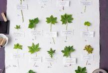 Grow Herbs. / by Ab & Lin Porter