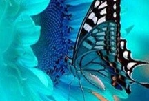 Butterflies And Such... / by Teresa Sliney