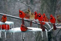 My feathered friends / by Melissa Bozzuto