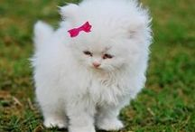 Beautiful! or Cute! or Fun! / by Ab & Lin Porter