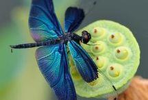 DRAGONFLYS / dragonflys