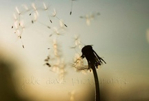Quiet Moments / Photography by members of the Female Photographers of Etsy (fPOE)