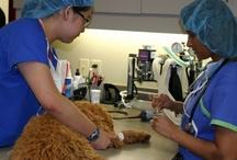 Veterinarians in Action / by Alberta Veterinary Medical Association
