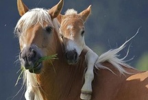 Motherly love / by Alberta Veterinary Medical Association