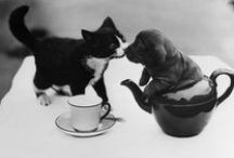 Furry little friends / Adorable pictures of pets and other lovable animals