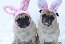 Easter  / A collection of Easter images for your viewing pleasure!  / by Alberta Veterinary Medical Association