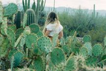 Desert Photoshoot / by Jackie Sterna