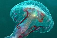 Underwater Wonders / by Sande Sivani