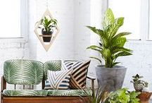 STYLE: Tropical / Colonial / From the Bahamas to Hawaii, from the Caribbean to coastal Australia - we're pinning tropical style for laid-back living. Embrace island time with lush greens and crisp white, palms aplenty and airy style to love. / by Temple & Webster