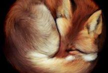 Foxy / by Iris Rankin