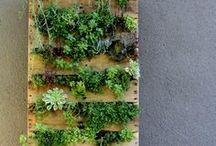 Garden and Yard / by Iris Rankin