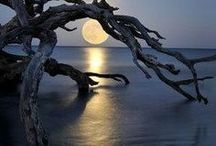 draw down the moon... / by Tammy Bloome