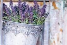 Lovely Lavender  / by Stefanie Pawlosky