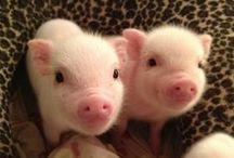 Cutest animals ever! / by Sarah Brockley