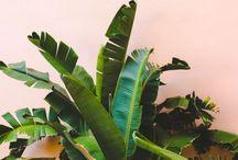 PlantsOnPink