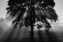 Leaves & Bark / by Gigi Stoll