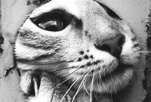 """Feline Frenzy / """"Cats have it all - admiration, an endless sleep, and company only when they want it.""""  ~ Rod McKuen"""