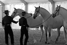 """Andalusians / Friesians / Lusitanos / Lipizzaners / """"...This most noble beast is the most beautiful, the swiftest and of the highest courage of domestic animals. His long mane and tail adorn and beautify him. He is of a fiery temperament, but good tempered, obedient, docile and well- mannered."""" ~ Pedro Garcia Conde, 1685 ~"""