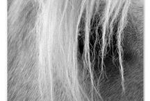 Golden Palomino / What's better than being blond? With flaxen mane and tail..