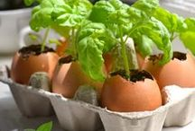 Gardening Goodness / Spring is in the air and that means that gardening season is just around to corner. We're bringing together a collection of tips and helpful gardening guides to help give you a greener thumb! / by Van's Foods
